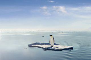Penguin-change-management